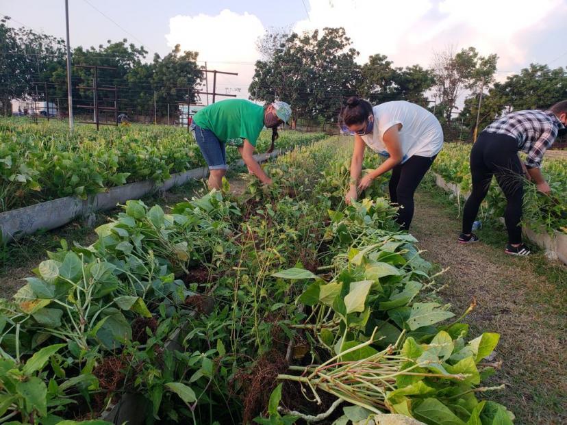 diaz_trabajo_voluntario4i.jpg