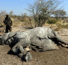 Los primeros 169 cadáveres fueron encontrados a principios del pasado mes de mayo en el delta del Okavango. Foto: Reuters.
