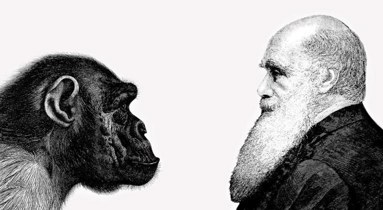 Científicos demuestran finalmente una de las teorías de la evolución de  Darwin   Cuba Si