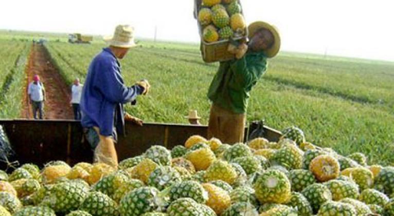 En medio de la situación derivada de la pandemia del Coronavirus, la producción de alimentos deviene medular.