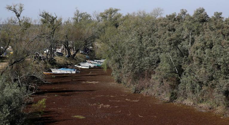 El Gobierno prevé la afectación sobre el abastecimiento y calidad del agua potable, la navegación, el ecosistema, la fauna y la generación de energía hidroeléctrica. Foto: Reuters.